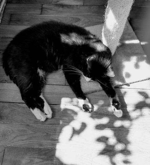 Dans l'ombre de la lumière